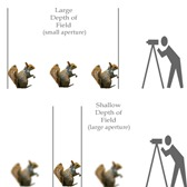 depth-of-field-guide