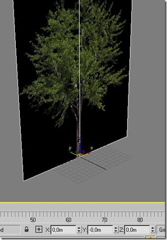 arbres06