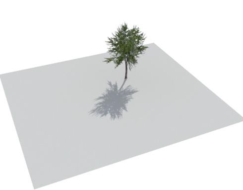 arbres08