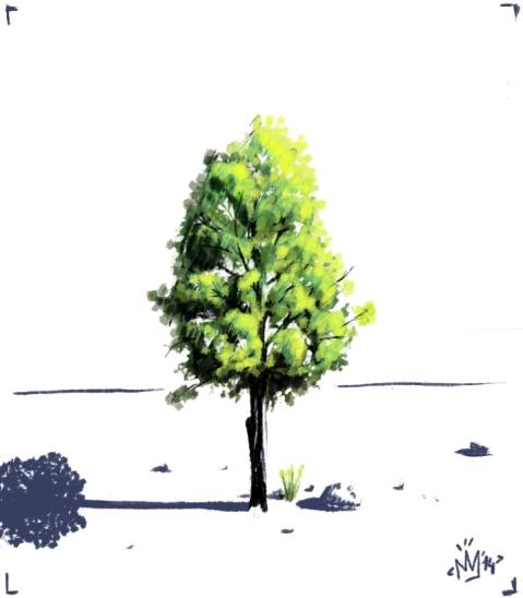 arbre i poc mes